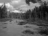 Wetland, East Lempster, NH
