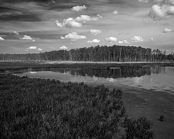 Blackwater National Wildlife Refuge #2