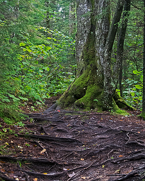 Along the Pemi Trail