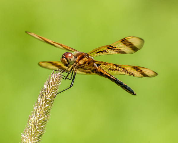 Halloween Pennant (Miller's River, Athol, MA)