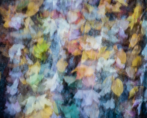 Autumnal Semi-Abstract 2 (2016)
