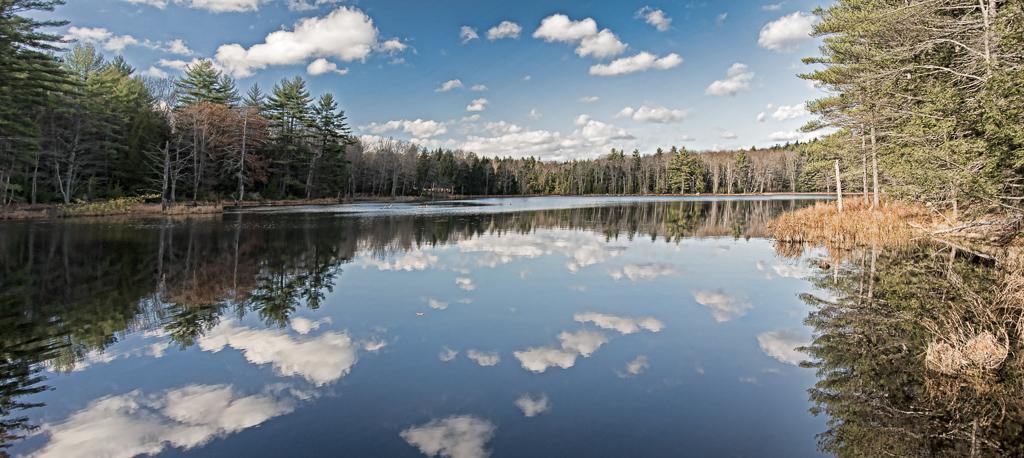 Birch Pond #2