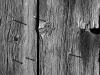 Barn Board #8