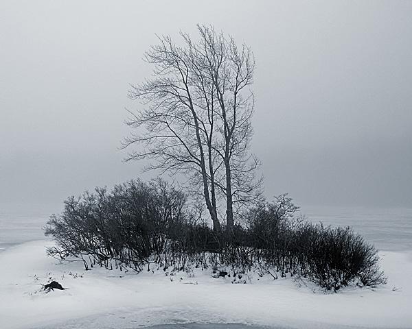 Gregg Lake Fog #1