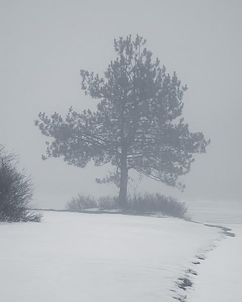 Gregg Lake Fog #3