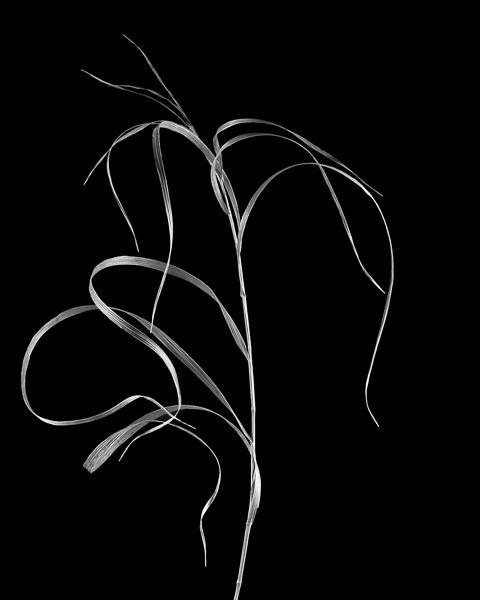 Botanical #2