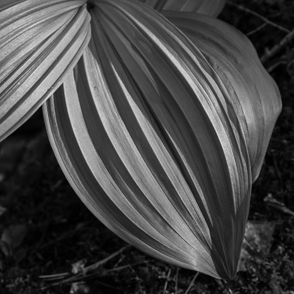 Wild Flower Foliage