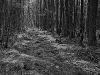 Bradford Bog #1