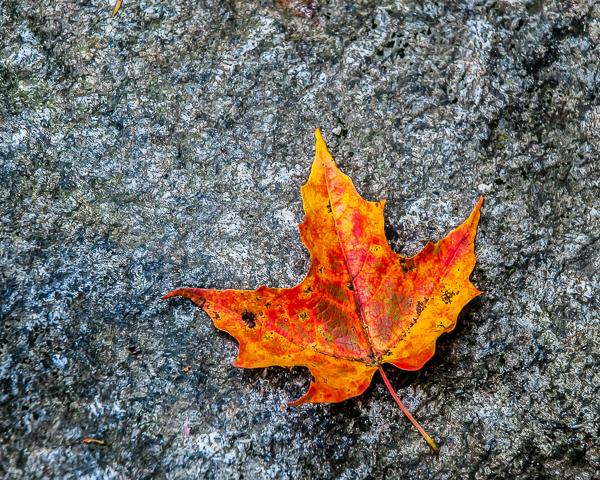 Maple and Granite