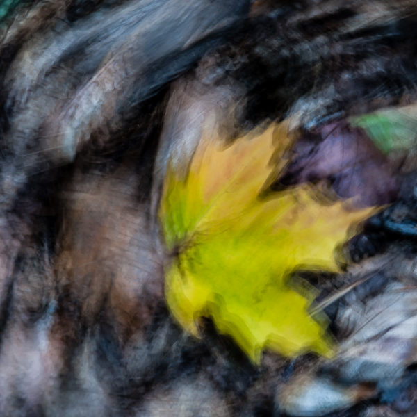 Autumnal Abstract 2015 - #4