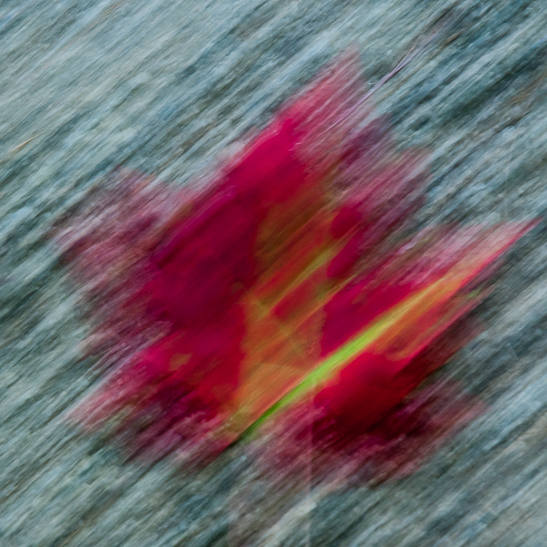 Autumnal Abstract 2015 - #9