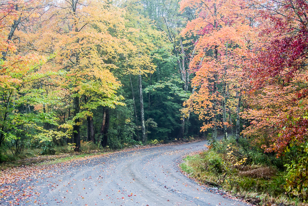 Bend in the Road in Autumn