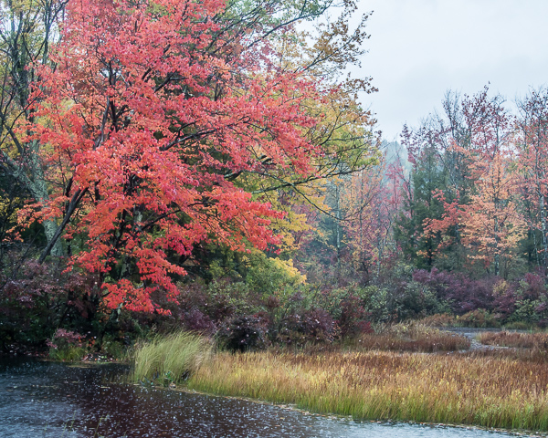 Autumn Wetland in the Rain