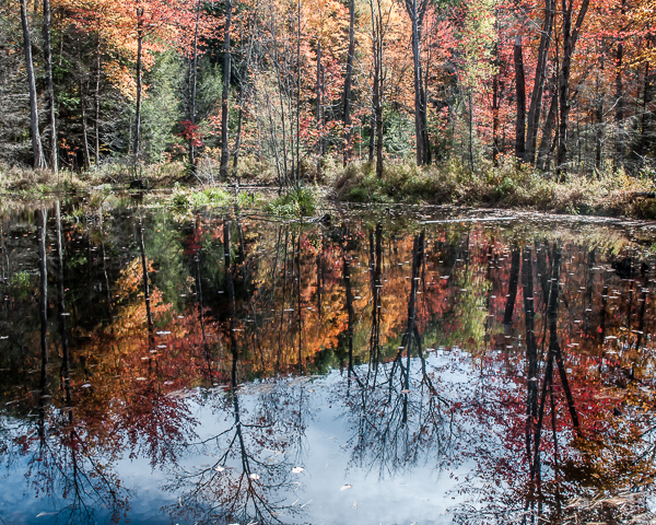 Wetland in Autumn (Bradford, NH) #2