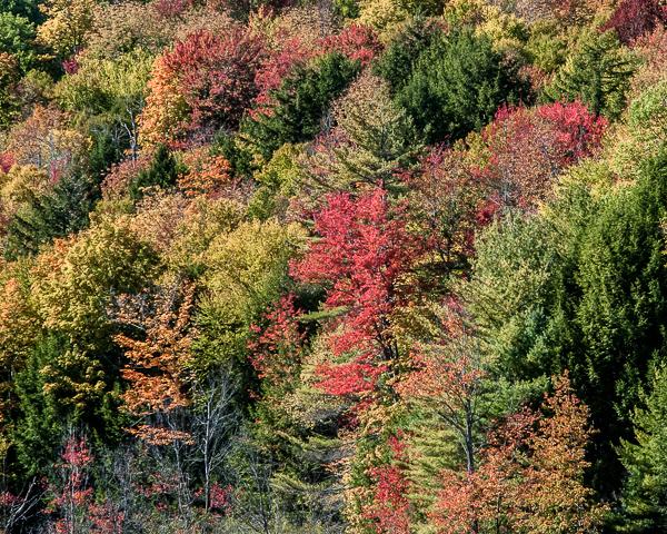 Autumn Foliage (detail)