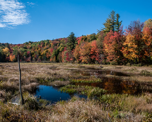 Wetland in Autumn (Washington, NH)
