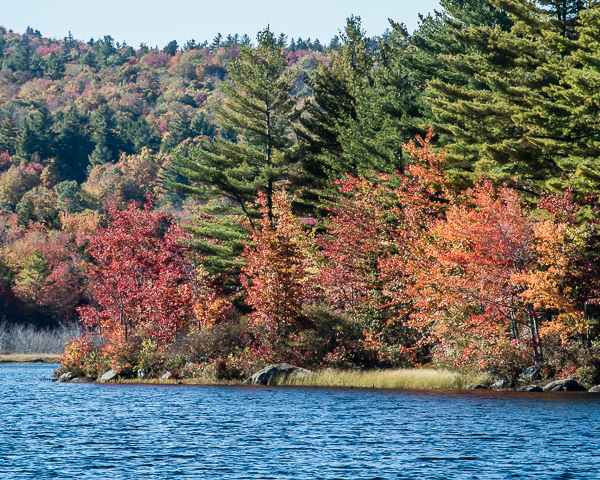 Autumn Foliage (Half Moon Pond, Washington, NH)