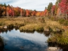Wetland in Autumn (Bradford, NH) #1