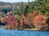 Autumn Foliage (Half Moon Pond, Washington, NH)