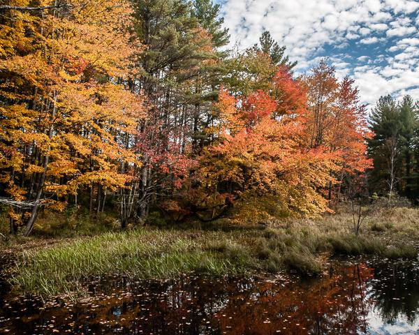 Autumn Wetland (Hillsborough, NH)
