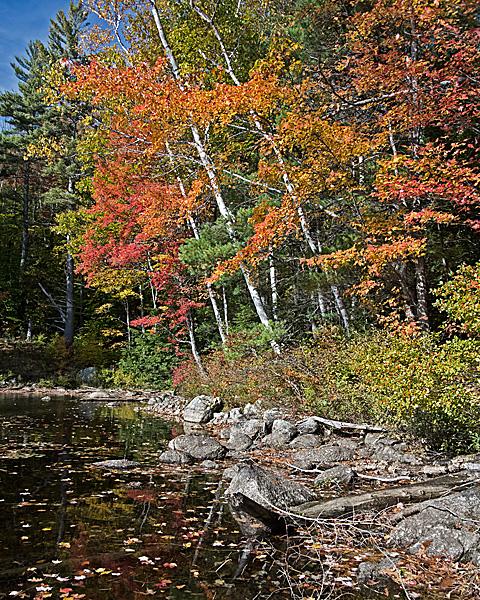 Lakeside Foliage #2