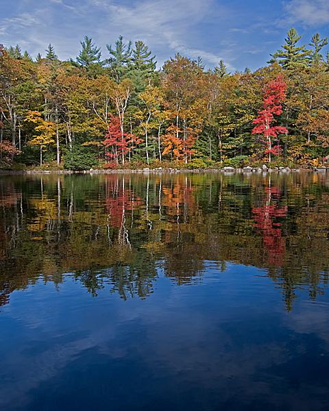 Lakeside Foliage #7