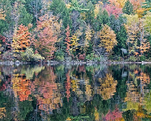 Lakeside Foliage #8