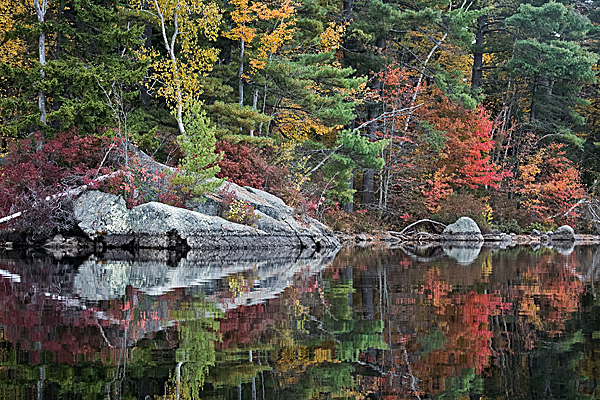 Lakeside Foliage #9