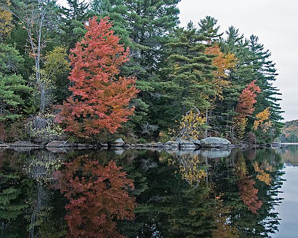Lakeside Foliage #11