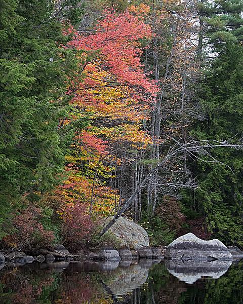 Lakeside Foliage #12