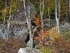 Lakeside Foliage #6