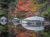 Lakeside Foliage #10