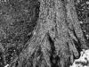 Tree-Rock Meld