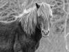 Assateague Horses #6