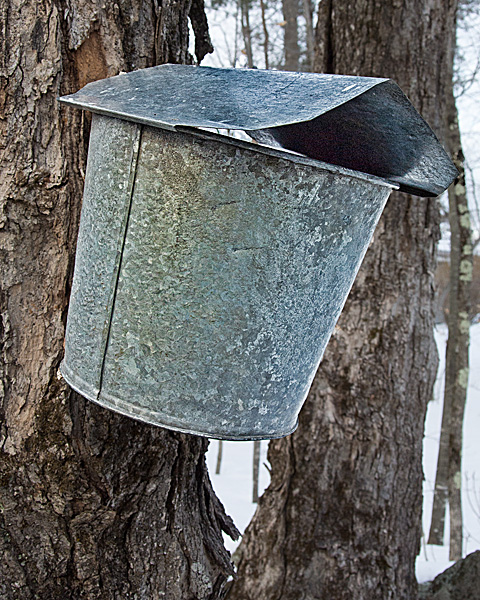 Sap Bucket