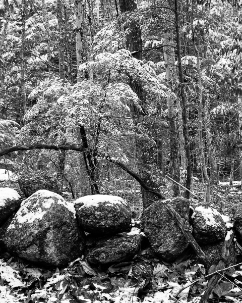 Early Snow #1
