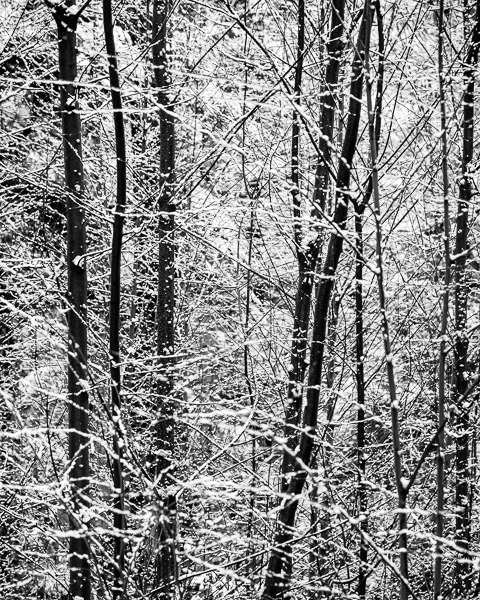 Early Snow #2