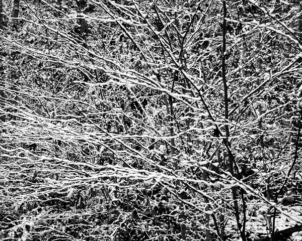 Early Snow #3