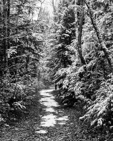 Early Snow #5