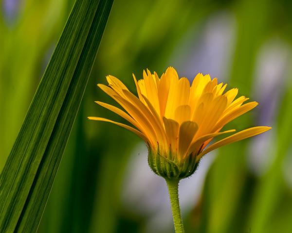 Garden Flower #2