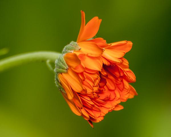 Garden Flower #5