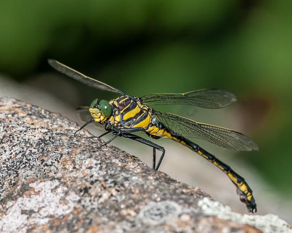 Dragonhunter (male)