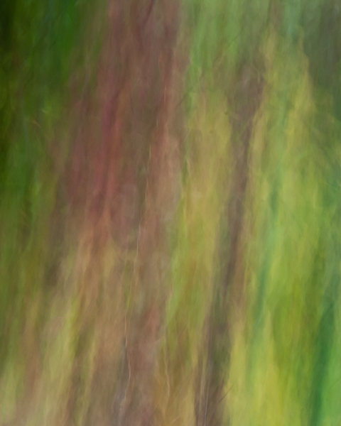 Autumnal Abstract 2015 #11
