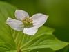 Wildflower #4