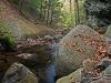 Grant Brook in Autumn
