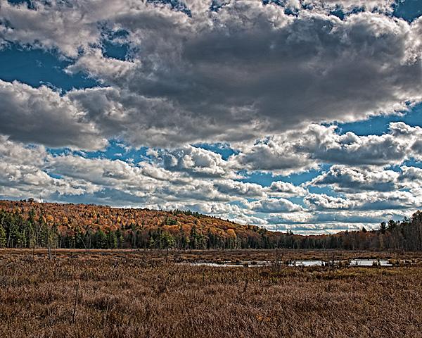 Local Wetland #1