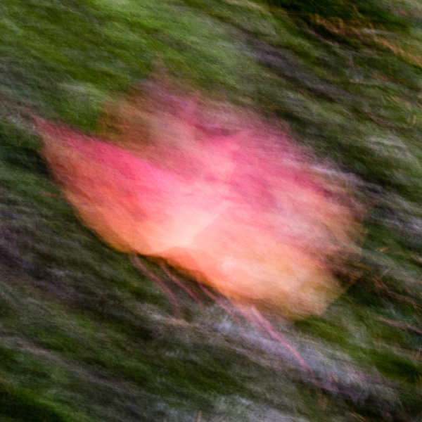 Autumnal Abstract #8
