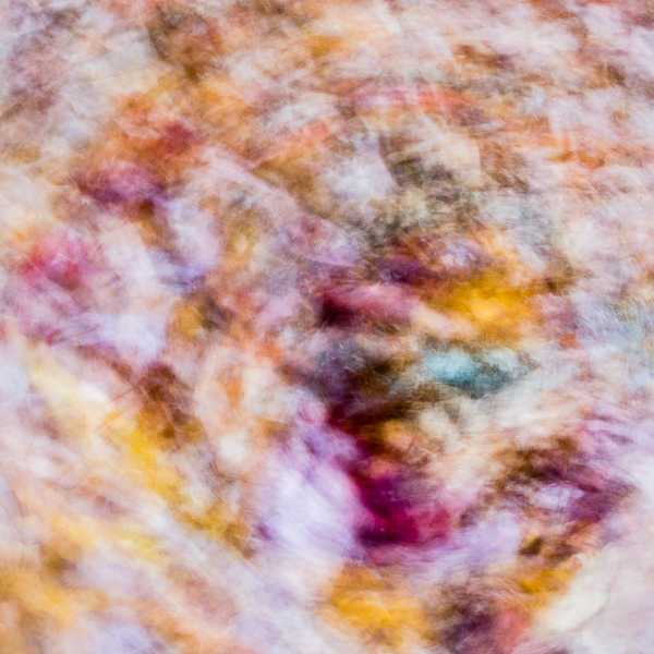 Autumnal Abstract #9