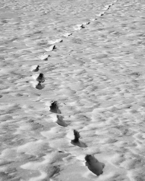 Tracks in the Snow #1