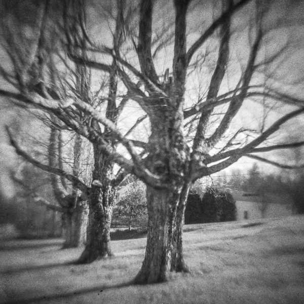 Trees, Ackworth, NH